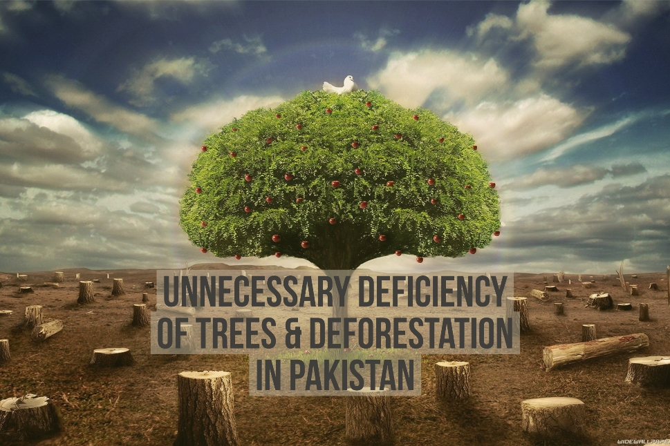 Unnecessary Deficiency of Trees & Deforestation in Pakistan