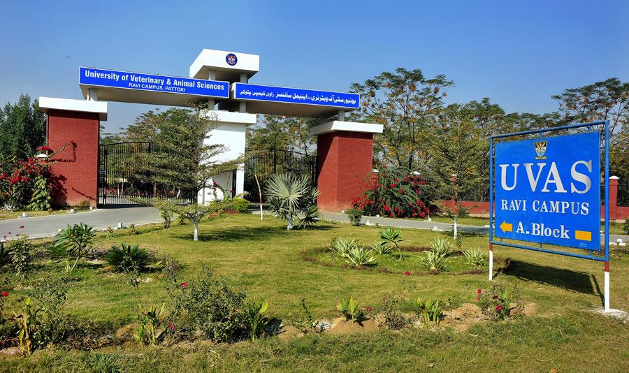 University of Veterinary & Animal Sciences UVAS Lahore Admission
